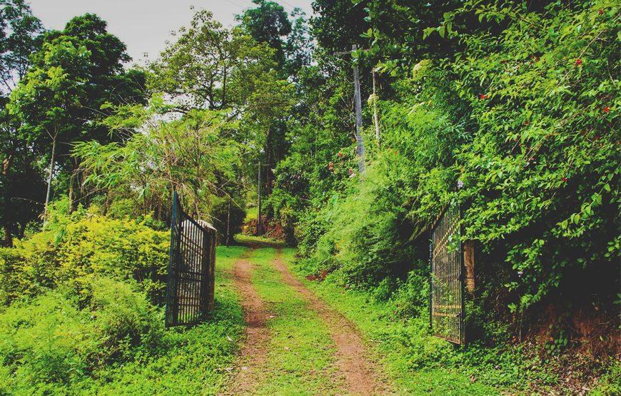 wayanad homestay in forest