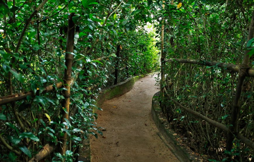 Greenish covered pathway in Alleppey Homestay Backwaters in