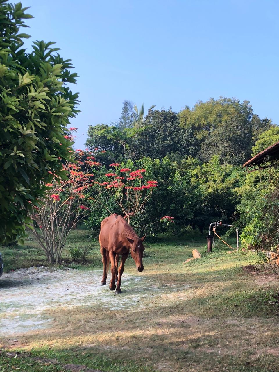 farm stay near bangalore